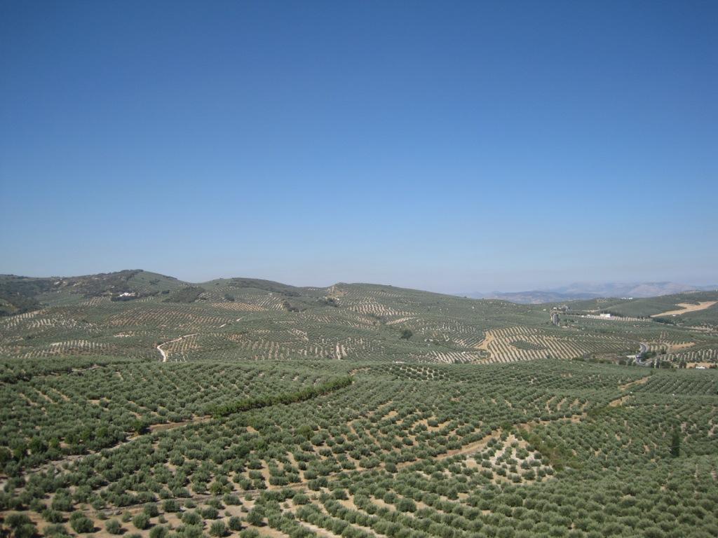 Campos de olivos de Jaén